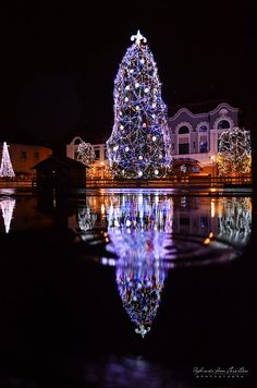 Romania, Europe - Christmas in Baia Mare, Romania Christmas In Europe, Christmas In The City, Merry Christmas And Happy New Year, Winter Holidays, Winter Christmas, Christmas Holidays, Christmas Medley, Christmas Images, Holiday Lights
