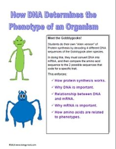 DNA, RNA, Protein Synthesis Worksheet / Study Guide ...