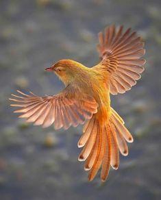 New Amazing Bird Photography Animals Ideas Pretty Birds, Beautiful Birds, Animals Beautiful, Stunningly Beautiful, Beautiful Pictures, Exotic Birds, Colorful Birds, Exotic Pets, Bird Pictures