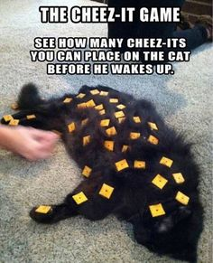 Funny pictures about Cheez-It Game. Oh, and cool pics about Cheez-It Game. Also, Cheez-It Game photos. Crazy Cat Lady, Crazy Cats, Pet Shop, Funny Cute, The Funny, Funny Man, Doug Funnie, Things To Do When Bored, Random Things To Do