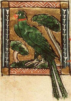 Medieval Bestiary : Parrot Gallery
