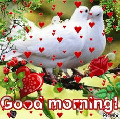 Good Morning Saturday Images, Good Morning Friends Images, Good Morning Dear Friend, Good Morning Beautiful Pictures, Good Night Love Images, Good Morning Image Quotes, Good Morning Cards, Good Morning Gif, Good Morning Picture
