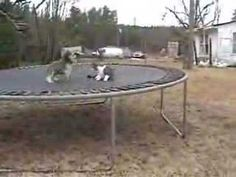 Cat vs Silly Dog Play Fight Race - http://positivelifemagazine.com/cat-vs-silly-dog-play-fight-race/
