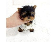 8 Best Free Puppies Images Stitches Cross Stitch Patterns Cross