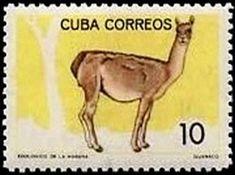 1964: Guanaco (Lama guanicoe) (קובה) (Havana Zoological Garden) Mi:CU 958,Sn:CU 897