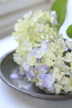 6月レッスン予定のお知らせです の画像|美的な押し花 カリグラフィー 花生活