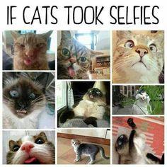 En ze zeggen dat katten geen gezichtsuitdrukkingen hebben