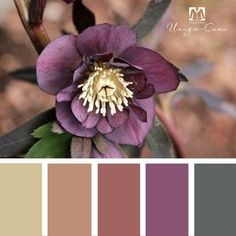 Room Niches: Discover 65 Creative Ideas to Decorate - Home Fashion Trend Yarn Color Combinations, Color Schemes Colour Palettes, Paint Color Schemes, Colour Pallette, Color Palate, Beautiful Color Combinations, Color Harmony, Design Seeds, Color Swatches