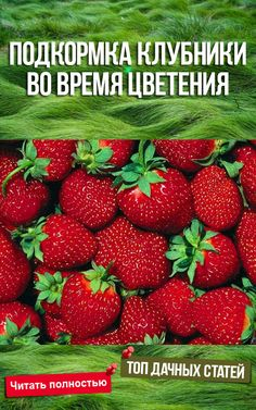 Small Farm, Growing Plants, Permaculture, Flora, Strawberry, Fruit, Vegetables, Outdoor, The World