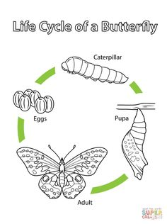 Life Cycle of a Frog coloring page from Biology category Select