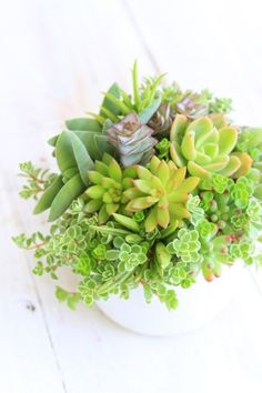 多肉植物寄せ植え - さぼたにバザール
