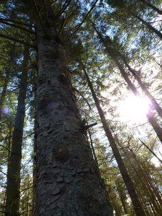 Tree in the autumn sunlight .Beecraigs Country Park