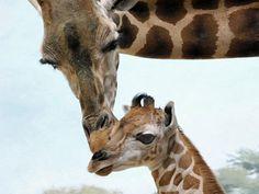 Google Image Result for http://www.petside.com/sites/default/files/baby-giraffe-1.jpg