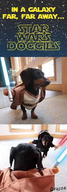 The force is with Crusoe the Jedi! #starwars #dachshund