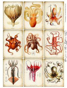 Octopuses - scanned vintage educational plates - downloadable collage sheet for you to print and use for your crafting projects -- card making, jewelry making, magnets, scrap books, hang tags, etc.    2.5x3.5 inch ATC size    by CobraGraphics on Etsy  (pl   Please Help Me Out   Checkout some ads only if they interest you. Thanks Click on scrapbooking.forallup.com Below.