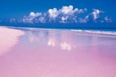 pink sands beach in Harbour Island, Bahamas #TheBeautyThatSurroundsUs