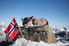 Norwegen Urlaub on a Budget - 53 Tage Nudeln