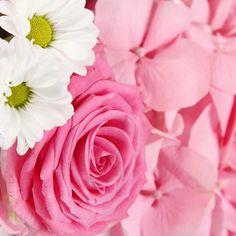 Summer Girl flower delivery gift service UK #hydrangea #summerflowers #flowers #white #pink #flowerdelivery #serenataflowers
