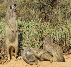 Babies Gang Up, Big Family, Mammals, Habitats, Kangaroo, Babies, Adventure, Babys, Kangaroos