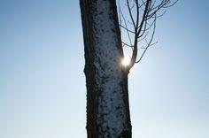 Sun, Plants, Photography, Photograph, Fotografie, Photoshoot, Plant, Planets, Fotografia