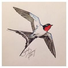 Image result for how to draw a swallow