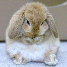 Floppy-eared bunnies are so adorable.