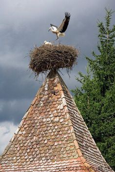 Storks nest.... We saw these nests on roofs in Gerhardshofen, Germany and in Alsace, France.