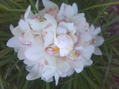 White and blush colored cymbidium orchids mixed with shells hand tied with raffia and sea grass