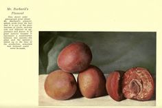 Luther Burbank: The Plumcot! True Nature, Luther, Fruit
