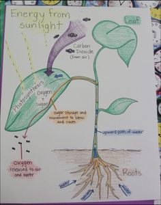 The photosynthesis poster is the summary of all we have learned about the process of photosynthesis. You will create a poster illustrating key components of photosynthesis. The poster needs to have. Science Notes, Science Experiments Kids, Science For Kids, Science Projects, Science Activities, Science Penguin, Science Notebooks, Biology Lessons, Science Lessons