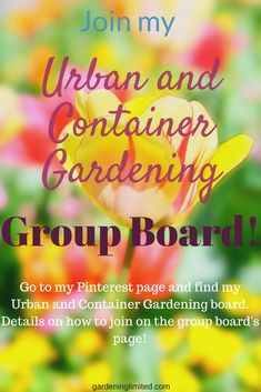 Container Gardening - Must-Know facts for successful gardens Vegetable Garden For Beginners, Gardening For Beginners, Gardening Tips, Urban Gardening, Steps In Planning, Group Boards, Container Gardening, Garden Design, Pinterest Blog