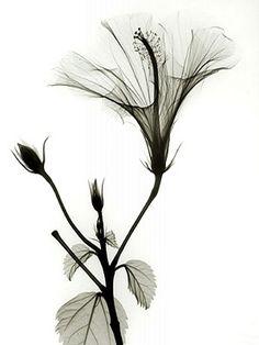Рентген-фотографии от Albert Koetsier