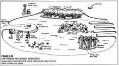 See a plethora of permaculture designs in this album. As they inspire you, decide if you want to use them in your home garden, or on a global scale. Permaculture Design, Permaculture Farming, Permaculture Principles, Agriculture, Eco Garden, Garden Care, Garden Ideas, Holistic Management, Natural Swimming Ponds