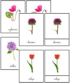 Cartes de nomenclature fleurs   Boutique ''documents Montessori''