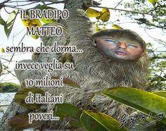 Il bradipo Renzi