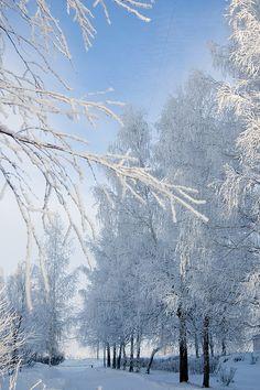 Wat een mooie winter uitzicht.