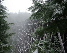 Old train trestle in the snow and fog - abandoned, train, trestle, snow. Abandoned Train, Abandoned Mansions, Abandoned Buildings, Abandoned Places, Places Around The World, Around The Worlds, Cool Pictures, Cool Photos, Amazing Photos