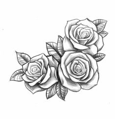 pencil drawing with three roses open side by side in black and white, sig . - pencil drawing with three roses open next to each other in black and white, meaning rose tattoo - Rosen Tattoo Frau, Rose Drawing Tattoo, Tattoo Sketches, Tattoo Drawings, Pencil Tattoo, Rose Drawings, Pencil Drawings, Hai Tattoos, Rose Tattoos