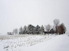 #winter #white