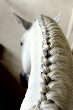 I WILL figure this one out...Braided mane