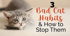 While most of our beloved cats are purr-fect companions, some of them have a few behaviors that are unacceptable - for example, scratching the furniture, urinating outside of the litter box, or bothering...