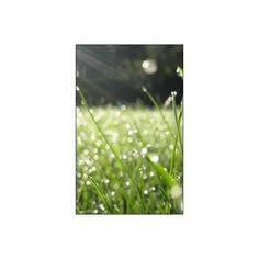 SCENERY , PHOTOGRAPHY , GRASS ❤ liked on Polyvore