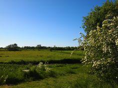 het Landschap bij Eastermar, in het Nederlands Oostermeer in Friesland. Bayke foto. The Netherlands