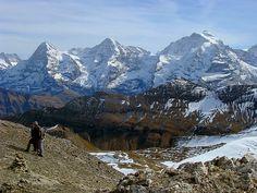 Eiger, Mönch en Jungfrau, Schweiz Where Eagles Dare, Alpine Flowers, Swiss Switzerland, Outside World, Kittens, Cats, Sounds Like, Travel Europe, The Great Outdoors