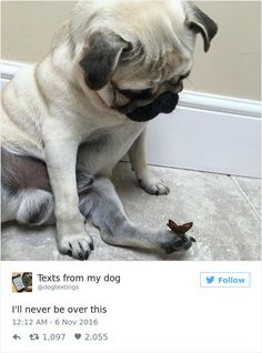 Think Twitter Is Too Negative? These Positive Tweets Will Make You Smile