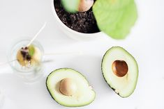 die besten 25 avocadobaum ideen auf pinterest avocadobaum ziehen avocado z chten und msn. Black Bedroom Furniture Sets. Home Design Ideas