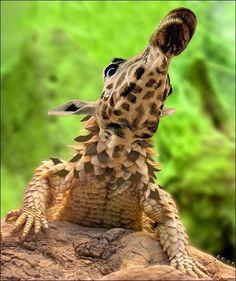 Un extraño ejemplar de lagarto jirafa