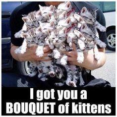 A Bouquet of Kittens