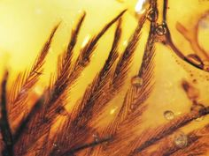 canada, dinosaur feather, fossil, dinosaurs, rock, feathers, ancient amber, birds, scienc