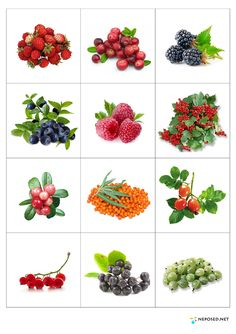 Fruit And Vegetables Flashcards 55 Ideas Fruit And Veg, Fruits And Vegetables, Learning Activities, Kids Learning, Baby Shower Fruit, Kids Background, Garden Markers, Montessori Materials, Fruit Drinks